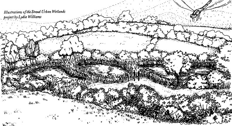 Illustration by Lydia Williams for the Stroud Urban Wetlands Project 1993